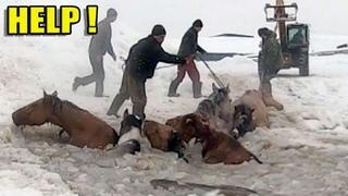 Подборка уникальных кадров спасения животных. Люди помогают животным оказавшимся в беде.