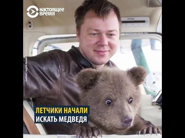 Летчики спасли двухмесячного медвежонка