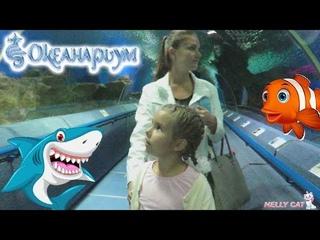 Океанариум СПб Путешествие Нелли в подводный мир Акулы и скаты SEA Aquarium Sharks & Stingrays