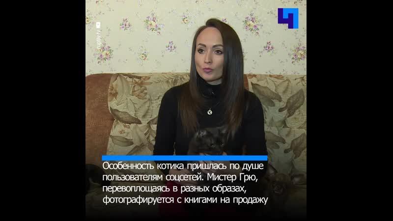В Свердловской области кот вампир продает книги и участвует в благотворительности