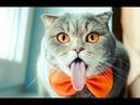 ПРИКОЛЫ С КОТАМИ И СОБАКАМИ 2021 / Приколы со смешными животными / Смешные котики Подборка 8