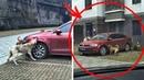 Betrunkener Fahrer trat beim Aussteigen herrenlosen Hund später traf ihn der Schock