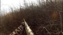 Удачные охоты на кабана.