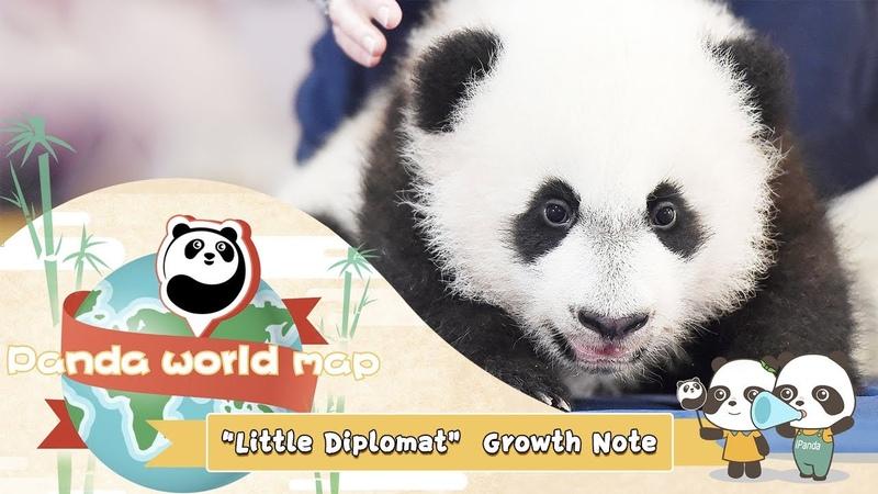 "Panda World Map Little Diplomat"" Growth Note iPanda"