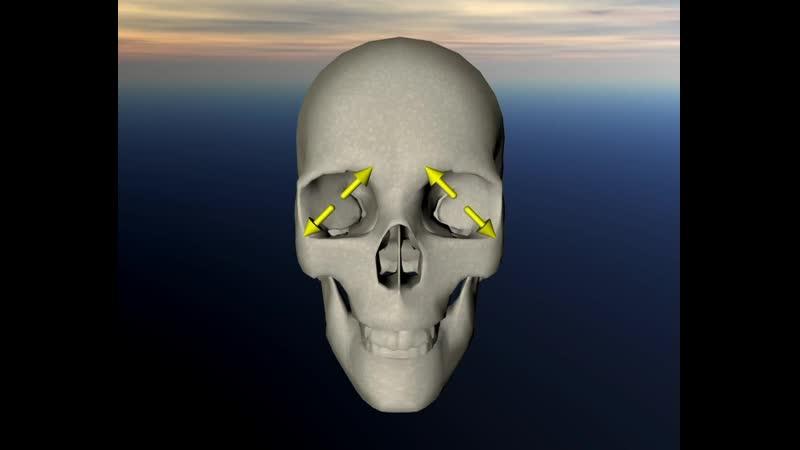 VTS 50 1 глазные глазница