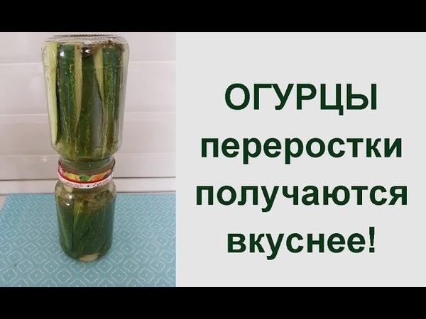 Огурцы на зиму Вкусные переростки консервированные