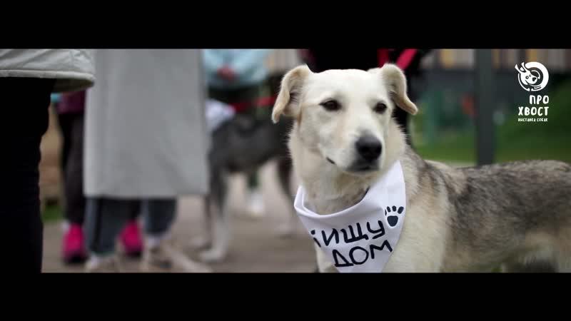 Выставка бездомных собак ПроХвост