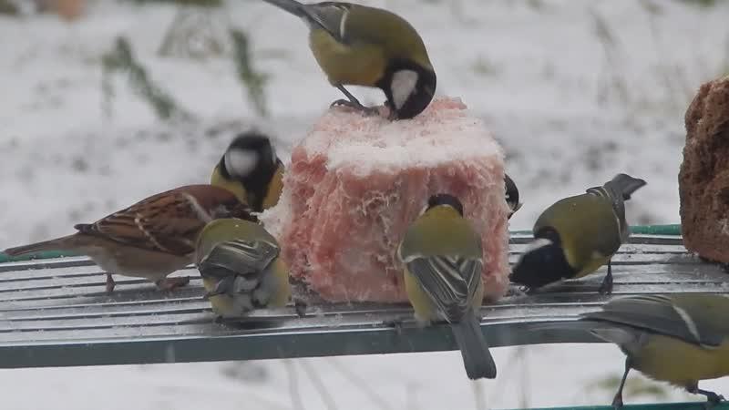 Столовая для птичек синичек Холодает снег идёт