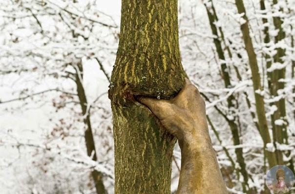 Рука сжимающая дерево
