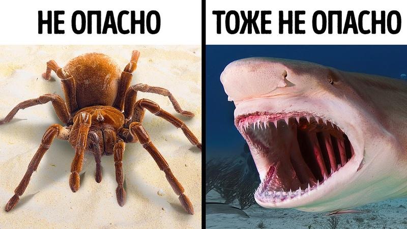 14 страшных но не опасных животных
