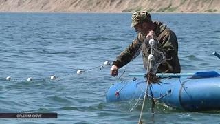 Как проходит лососевая путина у рыбаков Магадана?