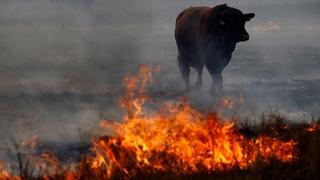 Аномальная засуха в России. Скот голодает