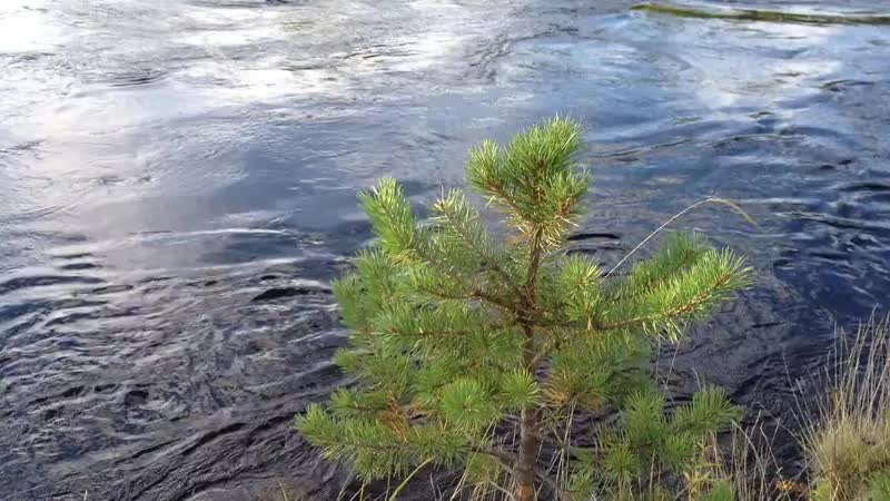 Река Иова п Зареченск