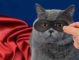 Почему котики уделывают Билла Гейтса