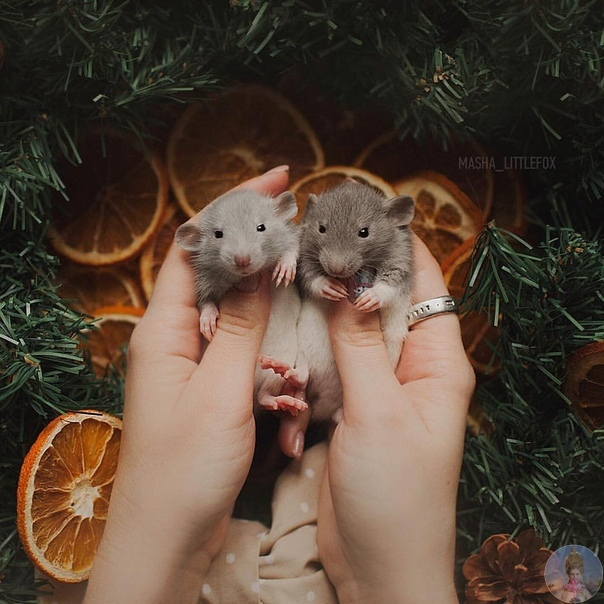 Новогодние мышата от Masha littlefox