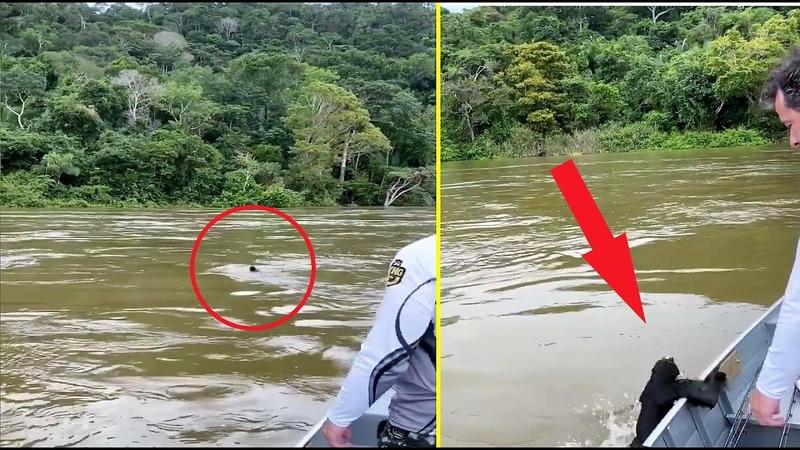 Рыбаки ловившие рыбу на АМАЗОНКЕ увидели барахтающееся существо и не поверили своим глазам