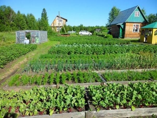 Необычные советы для огородников