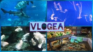 VLOGea: Океанариум в COEX Mall, Аквариум в COEX Mall, COEX Aquarium