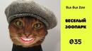 Говорящие коты / Озвучка животных / Подборка 035
