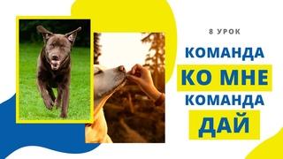 "Как научить собаку команде ""Ко мне""? Как научить собаку команде ""Дай""? Прогулки без поводка (Урок 8)"