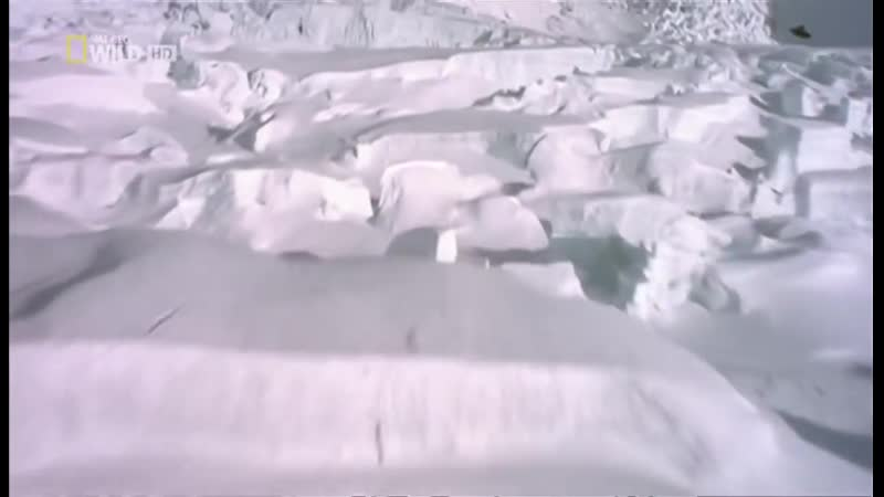 National Geographic I Denali Alaskas unberührte Wildnis