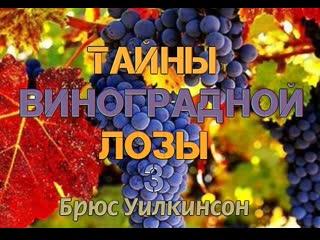Б.УИЛКИНСОН - ТАЙНЫ ВИНОГРАДНОЙ ЛОЗЫ - 3 ЧАСТЬ