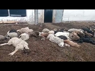 Трупы животных в Ачинском районе