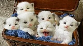AWW CUTE BABY ANIMALS Videos Compilation Funniest and cutest moments of animals - OMG So Cute #16