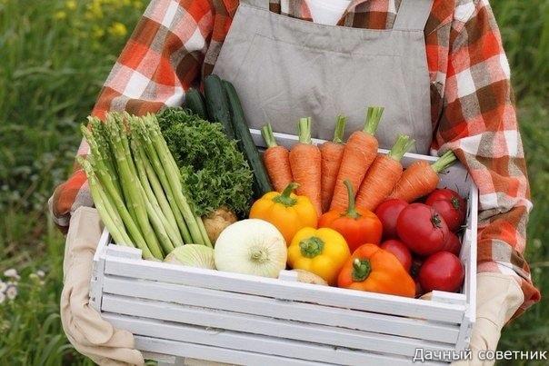 Немножко хитростей для садоводов и огородников!