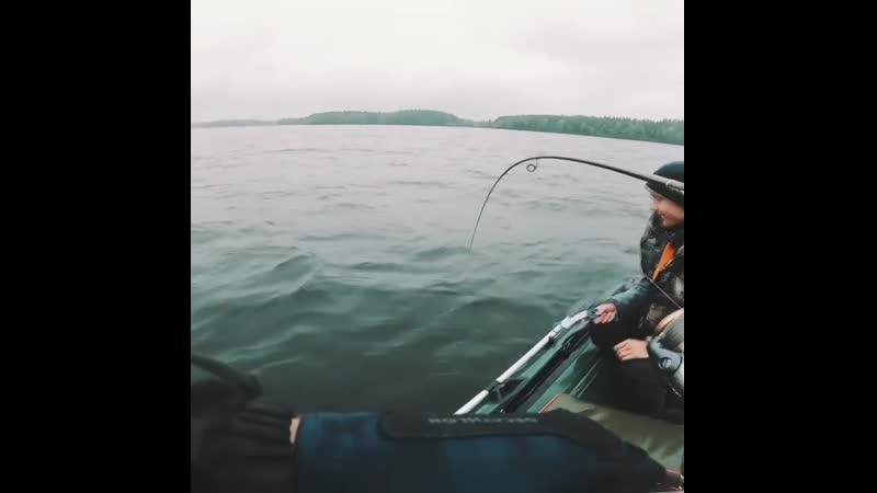 Водло озеро 2020 Карелия Судак на 7 4 кг