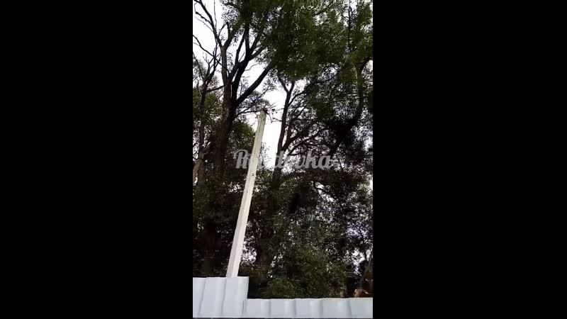 Старые деревья грозят рухнуть на дом