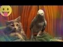 Попугай и кот/попугай поёт коту🐈🐦