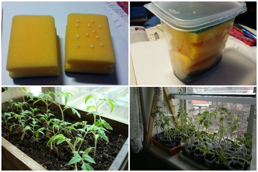 Собираем проращиватель для семян