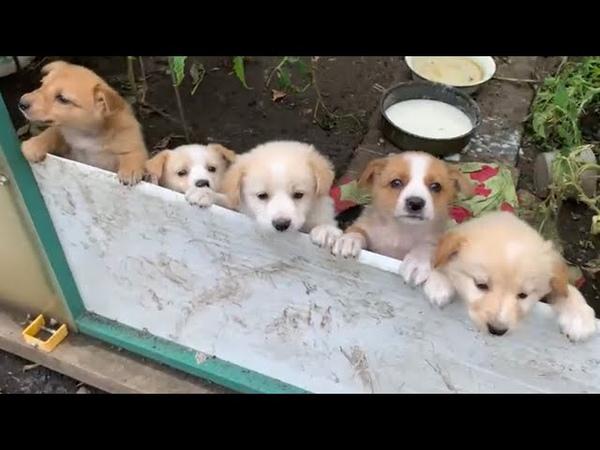 Щенки убитой собачки замерзают в глуши и едят 1 раз в день Спасите малышей 🆘