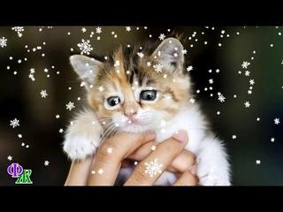 Замерзающий котенок примостился на сапоге девушки и пытался рассмотреть ее заледеневшими глазками