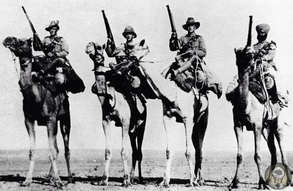 Быт и нравы камельеров К Османской империи в Первой Мировой относятся скептически, мол государство безнадёжно отстало от Европы и якобы даже от Болгарии Центру было больше пользы. Это, конечно,
