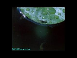 BBC Живая планета Портрет Земли 08 Сладкая свежая вода Документальный 1984
