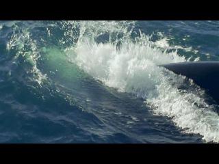 BBC Морские гиганты Серия 1 Жизнь гигантов