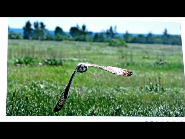 Золотая черепаха 7. В Тяхт часть-2
