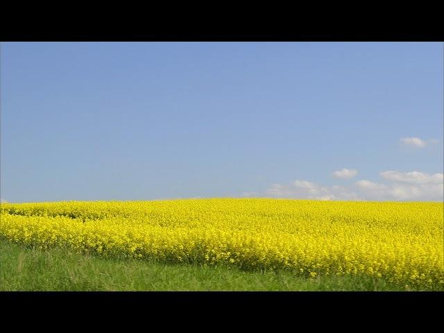 Українська весільна пісня - Як Посіяв Мужик Та Й У Полі Ячмінь