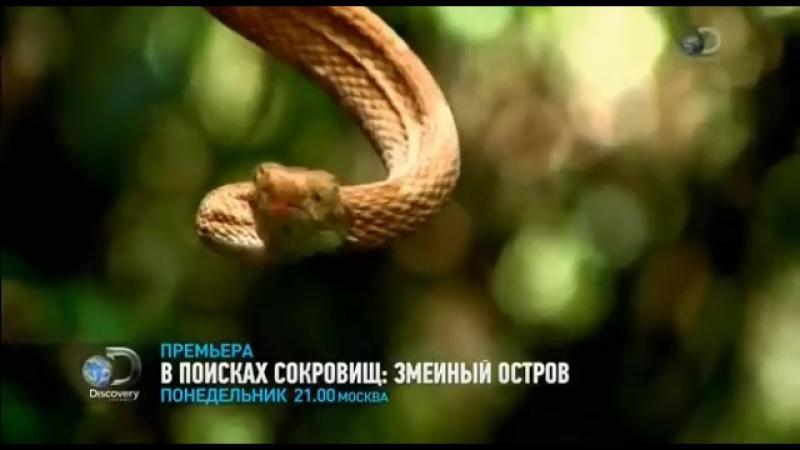 В поисках сокровищ_ змеиный остров. Discovery