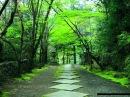 Ryuichi Sakamoto Forbidden Colours Original