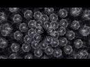 """Macoto Murayama and Echoton, """"Sunflower"""", single channel video, 8'07'', 2014"""