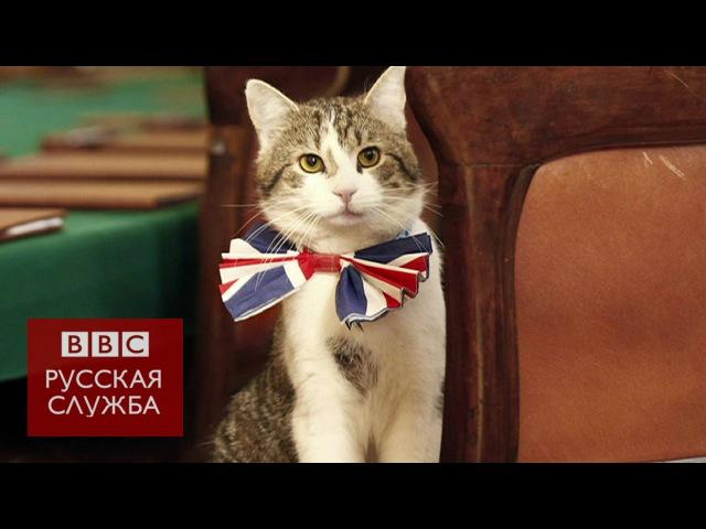 Этого кота называют настоящим хозяином Даунинг-стрит
