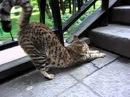 Cat Morning Yoga