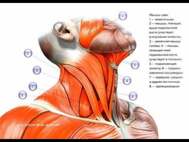 телесная терапия снятие напряжения испуга и зажимов консультации