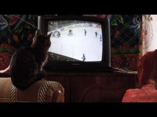 Котенок смотрит хоккей.
