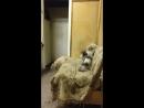Работа. Бешеные котята в легковом гараже.