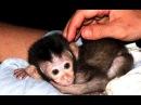 Маленькие Обезьянки - смешные и милые дети обезьян Видео NEW HD