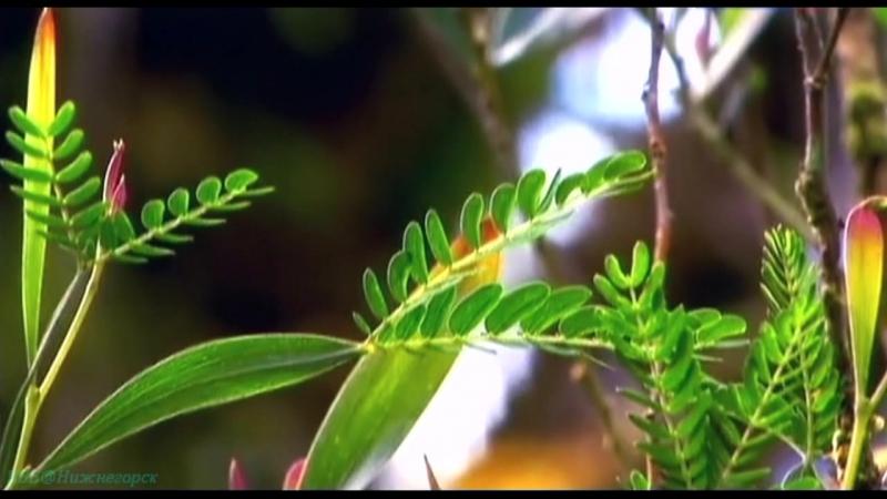 Остров чудес 1 . Сын огня и океана Познавательный путешествие природа 2006